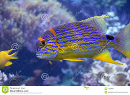 rainbow fish stock photo image 53804615