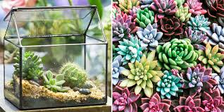 succulent facts 31 perfect gifts for anyone who loves succulents