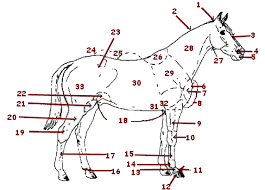 body parts of the horse