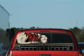 Truck Bed Dog Crate Dog Clings To Top Of Crate In Bed Of Speeding Pickup Truck Peta