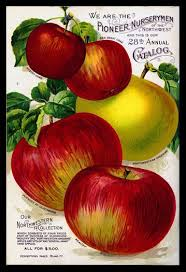 appleseed catalog apple seed packet search seed packet inspiration