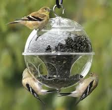 wild birds need u0026 crave black oil sunflower seed garden harvest