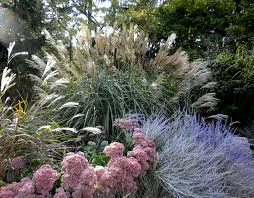 ornamental grasses and how to prune them catholicmom