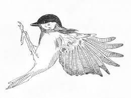 sophie brabbins bird drawings