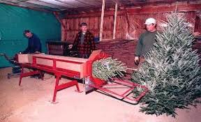 mail order trees new maine new hshire