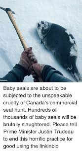 Baby Seal Meme - grassrlots baby seals are about to be subjected to the unspeakable