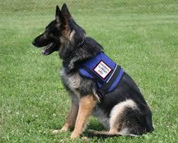 Comfort Dogs Certification Faq Companion Animals