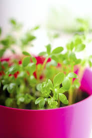 how to plant a small container herb garden for your kitchen herbs