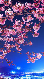 pink flowers on branches cherry blossom wallpaper download 1080x1920