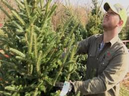 real trees more expensive this year
