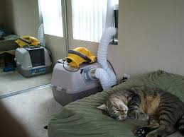 best litterbox for messy cats cat forum cat discussion forums