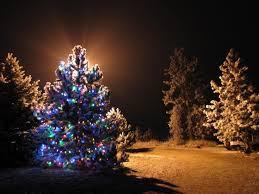 outdoor tree lights netting light