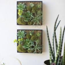 product tags succulent wall decor fort smith home decor