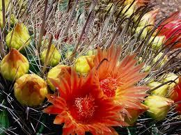 join us u2014 anza borrego desert state park botany society