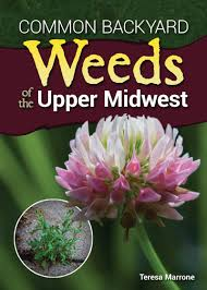idaho native plants landscaping with native plants of wisconsin 978 0760329696