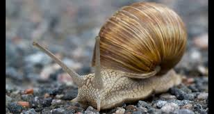 Where Can You Find Snails In Your Backyard 8 Edible Bugs That Could Help You Survive Backpacker