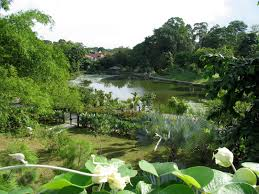 singapore botanical gardens u2013 a visit of wondrous nature