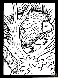 porcupine on the tree coloring page free printable coloring pages