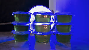 pretend you re a wizard with these glow in the dark jell o shots