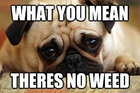 Stoner Dog Meme Generator - what you mean no weed funny stoner dog memes