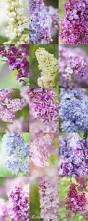 17 best images about purple purple purple on pinterest