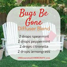 How To Get Rid Of Flies In The Backyard by Best 25 Gnats Away Ideas On Pinterest Gnat Repellant Gnat