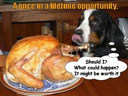 Happy Thanksgiving Funny Images What U0027s So Happy About It