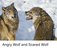 Angry Wolf Meme - angry wolf and scared wolf wolf meme on me me
