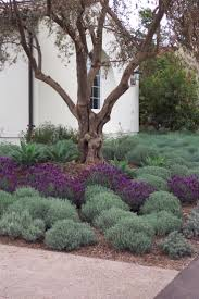 258 best outdoor spaces drought tolerant u0026 california native