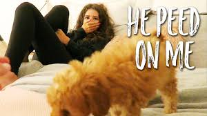 Dog Peed On Bed He Peed On Our Bed Youtube