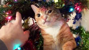 trying to decorate a christmas tree with cats around youtube