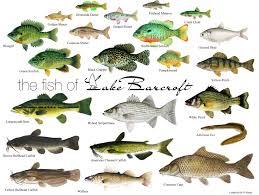 Types Of Aquarium Fish Freshwater Fish Types Freshwater Fish Fishing Chart Sportsmans