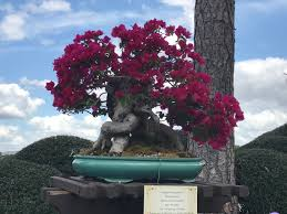 Bougainvillea Topiary - the flower and garden festival pt 1 topiaries galore disney