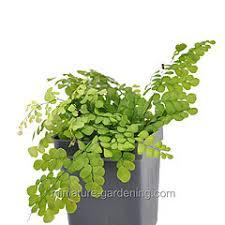 mini plants all mini plants a z miniature garden fairy houses fairy garden