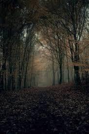 wallpaper tumblr forest autumn hd wallpaper tumblr