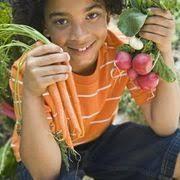 Natural Insecticide For Vegetable Garden by 111 Best Pests Be Gone Images On Pinterest Garden Pests