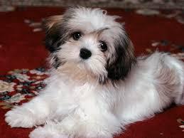 25 best cute puppy wallpaper ideas on pinterest pets pet