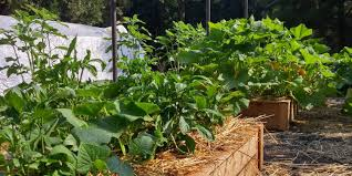 simply organic how to start your own organic garden everything
