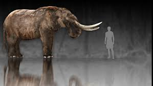 american mastodon woolly mammoth