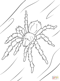 chilean rose tarantula coloring page free printable coloring pages