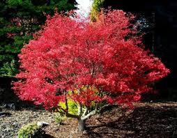 garden with ornamental trees trees for your garden