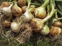 girlzroomideas com opva2 opva onion pastebin related keywords suggestions opva onion