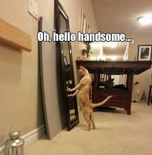 Anxiety Cat Memes - funny anxiety cat registration meme segerios com segerios com