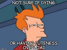 Cuteness Overload Meme - futurama fry meme imgflip