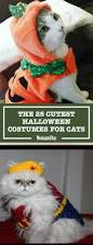 picture of halloween cats 30 pet cat halloween costumes 2017 cute ideas for cat costumes
