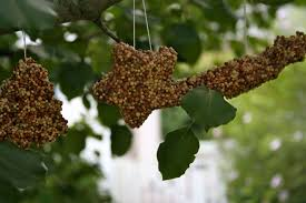 bird feeders the fall project for and parents
