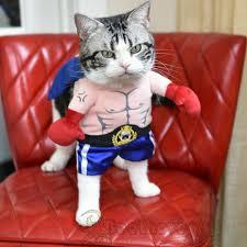 Boxer Halloween Costume Aliexpress Com Buy Funny Halloween Pet Cat Dog Boxer Standing