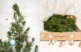 get a mini tree for your bedroom with bloom s pop