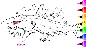 hammerhead shark drawing and coloring pages for kids u0026 how to