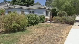 sacramento native plants looking for lawn substitutes we have ideas